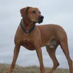 Dokážete se postarat o psa? Zamyšlení pro budoucí majitele