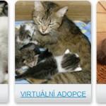 Útulek pro kočičky prosí o pomoc – Zachraňte opuštěné kočičky