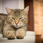 I zvířata se musí vyprazdňovat aneb Záchod pro kočky