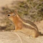 Veverky a jejich chov