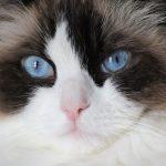 Kočky a jejich kastrace