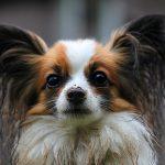 Psí jména na CH – 367 jmen pro psa nebo fenku