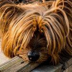 Psí jména na L – 772 jmen pro psa nebo fenku