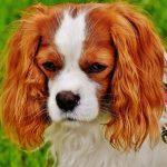 Psí jména na P – 871 jmen pro psa nebo fenku
