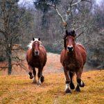 7 filmů o koních
