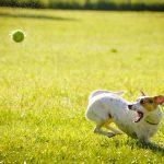 Míčky, které budou vaši psi milovat