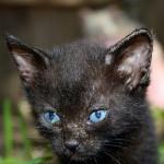 Zdraví koťat a trénink – první část