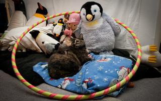 Autor obrázku: pinguino k
