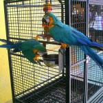 Jak se starat o papouška – první část