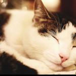 Kočičí útulek