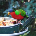 Jak se starat o papouška – druhá část