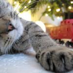 Zdraví koťat a trénink – druhá část