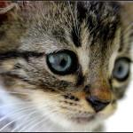 Jak se starat o kotě (první část)