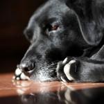 Pomozte opuštěným zvířatům a dejte jim dárek na Štědrý den