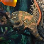 Terárium pro chameleona