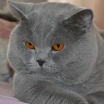 Kdo by nechtěl mít královnu koček doma?