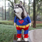 25 oblečků pro mazlíčka, které byste mu něměli pořizovat