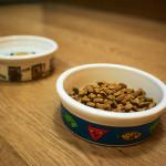 Granule pro kočky aneb čím krmit a nekrmit