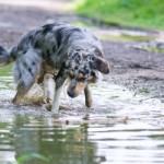 Jak správně koupat psa