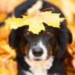 Připravte se s pejskem na podzim