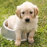 Víte dostatek o svém psím příteli? Ověřte si své znalosti v 7 základních bodech.