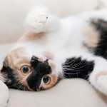 Jak odnaučit kočku škrábat nábytek
