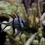 Ostatní akvarijní technika