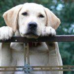 Vodicí psi – 2. část
