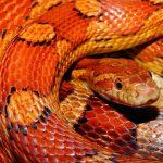 Chov hadů