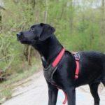Asistenční psi jsou skuteční pomocníci, bez kterých se mnoho lidí neobejde