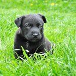 Psí jména na A – 1275 jmen pro psa nebo fenku