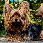 Psí jména na D – 1043 jmen pro psa nebo fenku