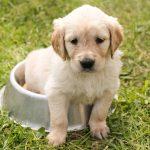 Psí jména na G – 922 jmen pro psa nebo fenku