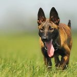 Psí jména na H – 714 jmen pro psa nebo fenku