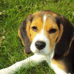 Psí jména na M – 1145 jmen pro psa nebo fenku