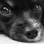 Psí jména na Q – 416 jmen pro psa nebo fenku