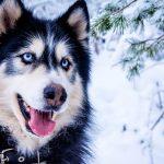 Psí jména na S – 922 jmen pro psa nebo fenku