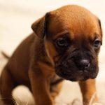 Psí jména na T – 978 jmen pro psa nebo fenku