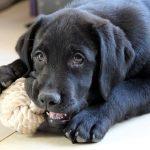 Psí jména na W – 592 jmen pro psa nebo fenku