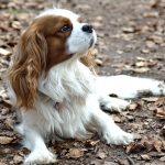 Psí jména na X – 351 jmen pro psa nebo fenku
