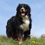 Psí jména na Z – 458 jmen pro psa nebo fenku