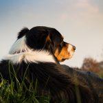 Výcvik štěněte aneb jak naučit svého pejska poslouchat – 2. díl