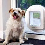 Zpřístupněte domácímu mazlíčkovi svůj dům