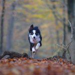 Jak na efektivní výcvik psa? Zkuste elektronický obojek