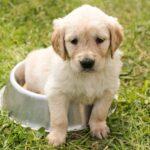 Jak správně krmit štěně? Poradíme vám!