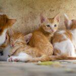 cat-3699032_640