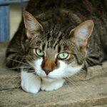 Paraziti koček – Škrkavka kočičí: Přítel na celý život?
