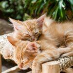 Nadstandardní doplňky pro všechny nadšené chovatele koček zahrnují například i kleštičky na drápky