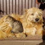282127_dog_and_cat