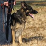 Jak naučit psa základní povely
